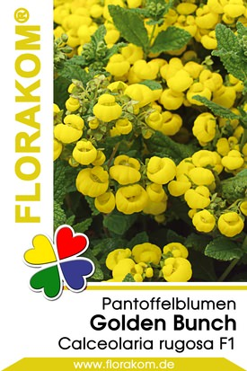Balkonpantoffelblumen Golden Bunch