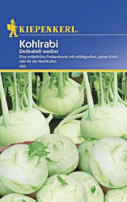 Kohlrabi Delikatess Weiß