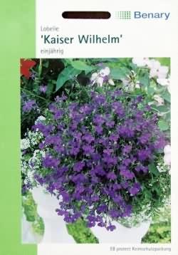 Männertreu Kaiser Wilhelm - Lobelien Samen