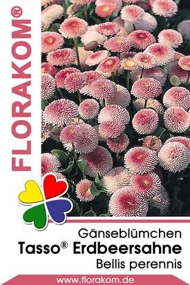 Gänseblümchen Tasso® Erdbeersahne