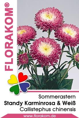 Sommerastern Standy Karminrosa & Weiß Samen