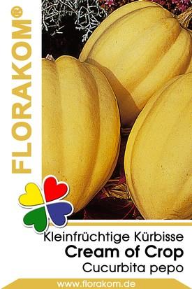 Speise- + Zierkürbis Cream of the Crop