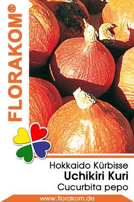 Speisekürbis Hokkaido Uchiki Kuri