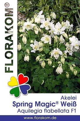 Akelei Spring Magic® Weiß Samen