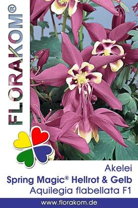 Akelei Spring Magic® Hellrot & Gelb Samen