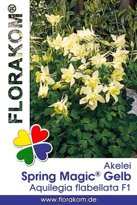 Akelei Spring Magic® Gelb Samen