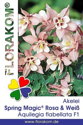 Akelei Spring Magic® Rosa & Weiß Samen