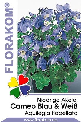 Zwergakelei Cameo Blau & Weiß Samen