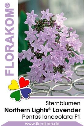 Sternblumen Northern Lights® Lavender