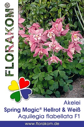 Akelei Spring Magic® Hellrot & Weiß Samen