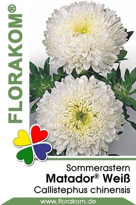 Sommerastern Matador® Weiß Samen
