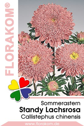 Sommerastern Standy Lachsrosa Samen