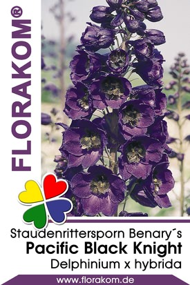 Rittersporn Benarys Pacific Black Knight
