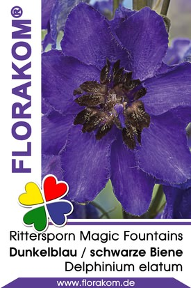 Rittersporn Magic Fountains Dunkelblau mit Schwarzer Biene
