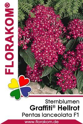 Sternblumen Graffiti® Hellrot