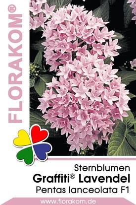 Sternblumen Graffiti® Lavendel