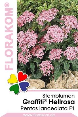 Sternblumen Graffiti® Hellrosa