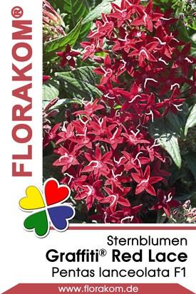 Sternblumen Graffiti® Red Lace