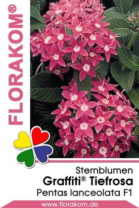 Sternblumen Graffiti® Tiefrosa