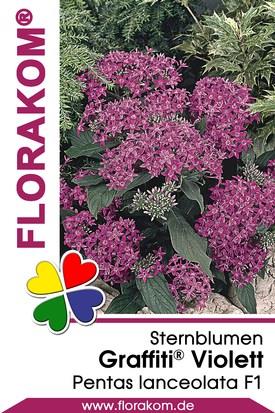 Sternblumen Graffiti® Violett
