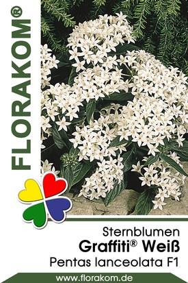Sternblumen Graffiti® Weiß