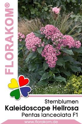 Sternblumen Kaleidoscope Hellrosa