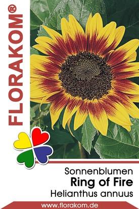 Sonnenblumen Ring of Fire