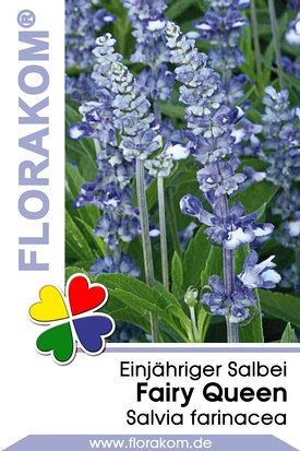 Salvien Fairy Queen - Salvia