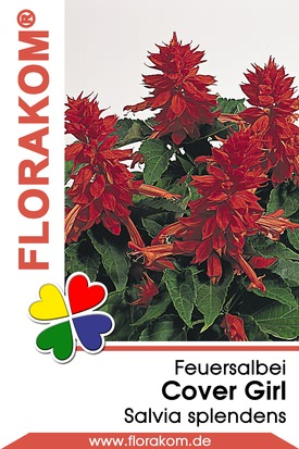 Feuersalbei Cover Girl® - Salvia