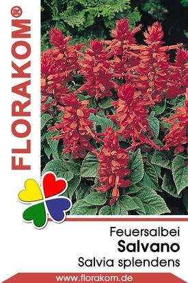 Feuersalbei Salvano - Salvia