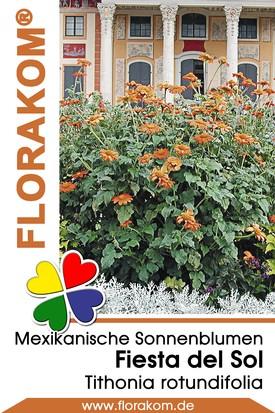 Mexikanische Sonnenblumen Fiesta Del Sol
