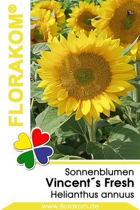 Sonnenblumensamen Vincent´s Fresh