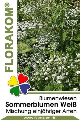 Blumenmischung Sommerblumen Weiß