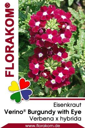 Eisenkraut Verino® Burgundy with Eye - Verbenen