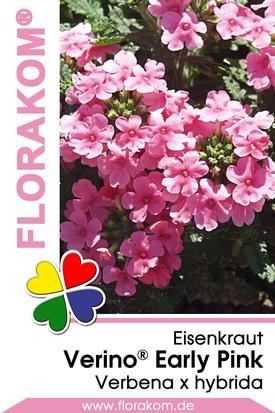 Eisenkraut Verino® Early Pink - Verbenen