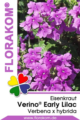 Eisenkraut Verino® Early Lilac - Verbenen