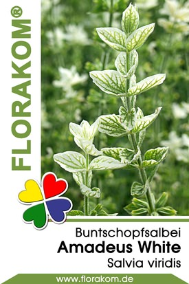 Buntschopfsalbei Amadeus White