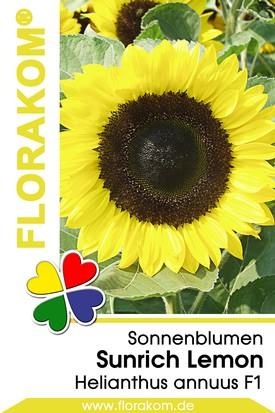 Sonnenblumen Sunrich Lemon