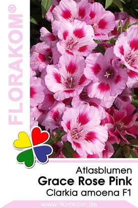 Atlasblumen Grace Rose Pink