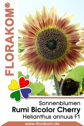 Sonnenblumen Rumi Bicolor Cherry