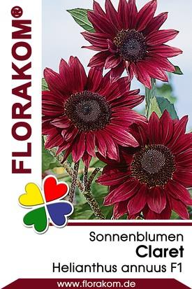 Sonnenblumen Claret