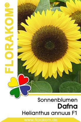 Sonnenblumen Dafna