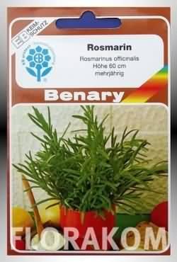 Rosmarin (B) Samen