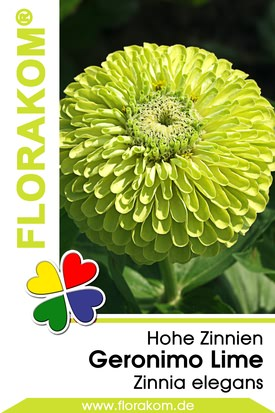 Zinnien Geronimo Lime