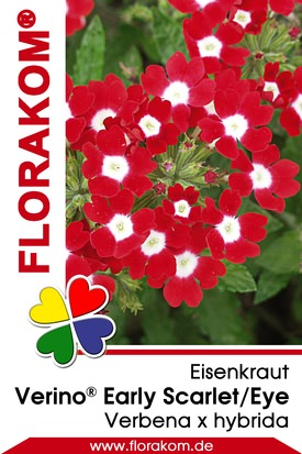 Eisenkraut Verino® Early Scarlet with Eye - Verbenen