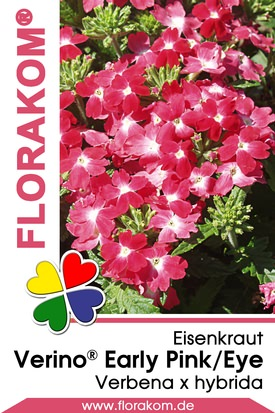 Eisenkraut Verino® Early Pink with Eye - Verbenen