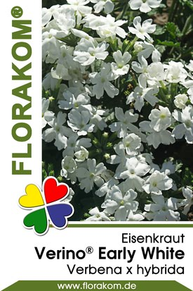 Eisenkraut Verino® Early White - Verbenen