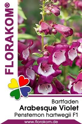 Bartfaden Arabesque Violet