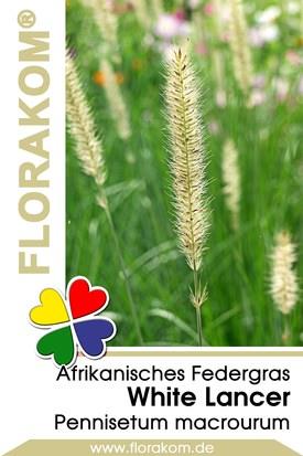 Afrikanisches Federgras White Lancer