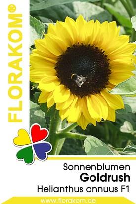Sonnenblumen Goldrush